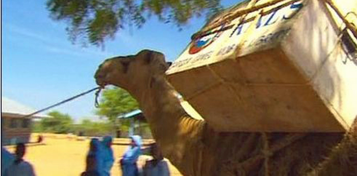 camel with books